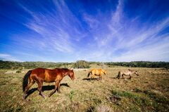Horses on equine farm Royalty Free Stock Images