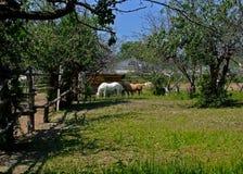 Horses. Stock Photos