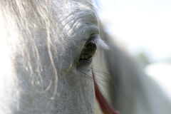 Horses eye Royalty Free Stock Photography