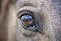 Horses eye Stock Images