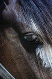 Horses eye. Stock Image