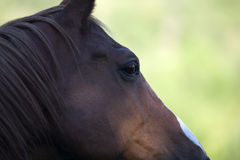 Horses face close up on eye Royalty Free Stock Images