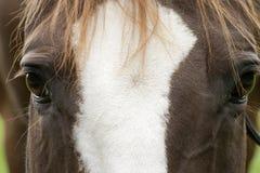 Horses face close up Stock Photos