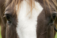 Horses face close up