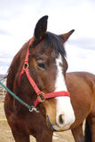 Horses face Stock Images