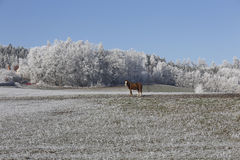 Horses in fairytale snowy winter countryside with blue Sky in Bohemia, Czech Republic Stock Photos