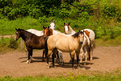 Horses on a Family Farm Stock Photo