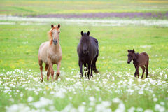 Horses family Royalty Free Stock Photos