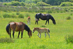 Horses family in springtime Stock Photo