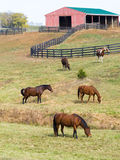 Horses on farm Stock Photos