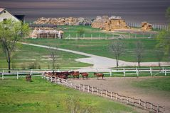 Horses on a farm. With stacks of hay an a field Royalty Free Stock Images