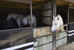 Horses Farm Royalty Free Stock Photo