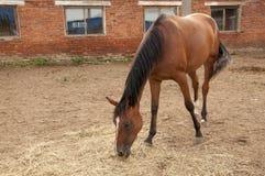 The horses on the farm Stock Photos