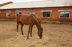 The horses on the farm. And eat hay groomed Royalty Free Stock Photo