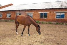 The horses on the farm Stock Photo