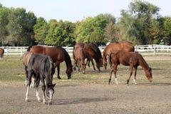 Horses on farm Stock Photos