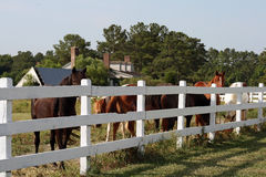 Horses at a farm Royalty Free Stock Photography