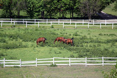 Horses on farm Stock Photo