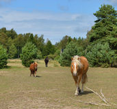 Horses on farm Royalty Free Stock Photo