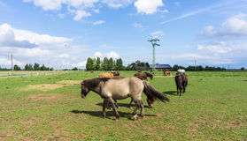 Horses. farm animals on meadow blue sky Royalty Free Stock Image