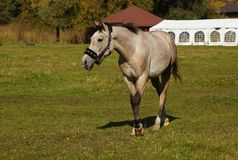 Horses on a farm in the autumn meadow Stock Images
