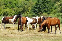 Horses on a farm in the autumn meadow Royalty Free Stock Photos