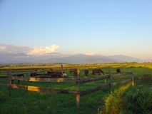 Horses on a farm Stock Image