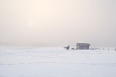Horses on farm in cold misty morning Stock Photography