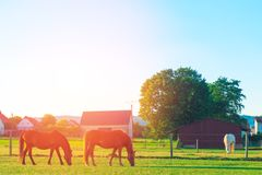 The horses on the farm stock images