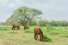 Horses on a farm with green grass. Horses standing on a farm with green grass, landscape Stock Photo