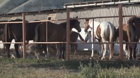 Horses on the farm. A horse stands in the corral. horses stands in a stall. horse looking in different directions. horse standing behind a wooden partition