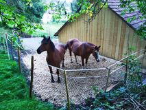 Horses on a farm in the Rhine valley stock photos