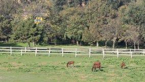 Horses on farm stock footage