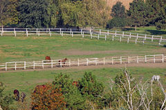 Horses on farm royalty free stock photography