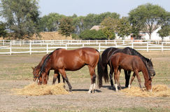 Horses farm scene Royalty Free Stock Image