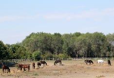 Horses farm scene Royalty Free Stock Image