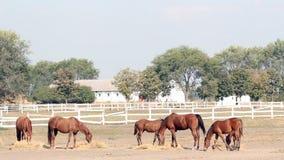 Horses farm scene stock footage