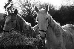 Horses on the farm Royalty Free Stock Photography
