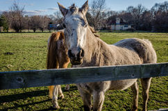 Horses at farm Royalty Free Stock Images