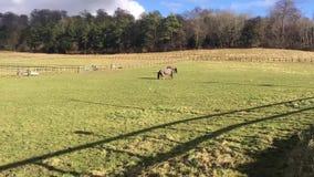Horses on the farm. Two horses on green farm. Reading, Berkshire, England stock video