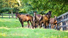Horses on the farm stock footage