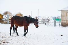 Horses on the farm in winter. Horses on the farm cloudy winter morning Stock Photos