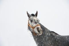 Horses on the farm in winter Stock Photos