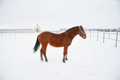 Horses on the farm in winter Stock Images