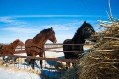 Horses on the farm in winter Royalty Free Stock Photos
