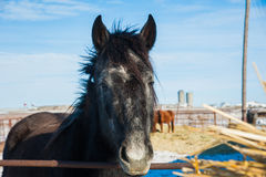 Horses on the farm in winter Royalty Free Stock Image