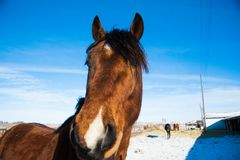 Horses on the farm in winter Stock Photography
