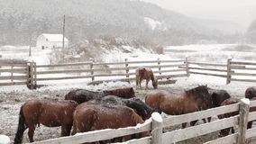 Horses on a farm in winter under snow stock footage
