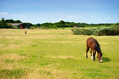 Horses on farmland in summer Stock Photos