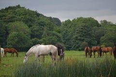 Horses feeding Stock Photos